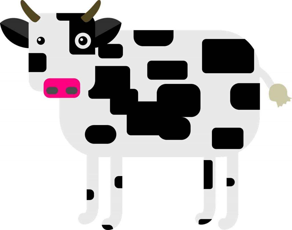 Image d'une vache dont le lait est source de lactose