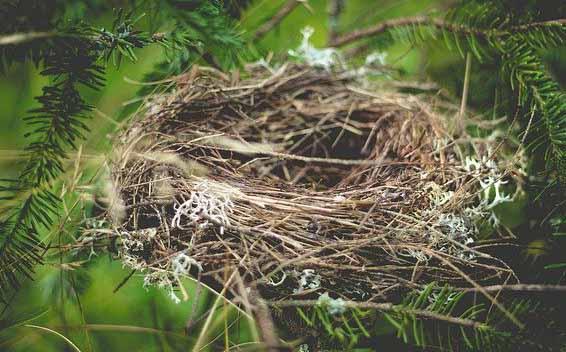 image d'un nid d'oiseau vide, ce qui représente bien le syndrome du nid vide quand les enfants partent de la maison